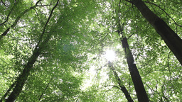 The sun shines through the trees Footage