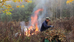 Man is burning leafs and branches near the forest Footage