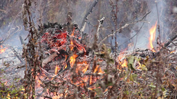 Danger of forest fire - unattended fire 2 Footage