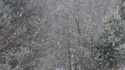 Snow Falling In The Forest stock footage