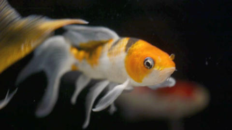 Fish2 Stock Video Footage