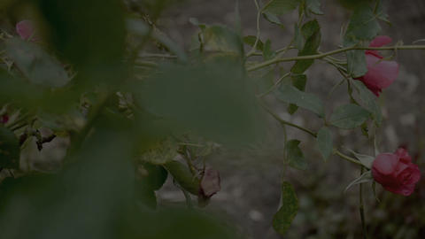 Flower garden 4 Stock Video Footage