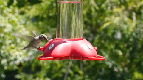 Hummingbird Footage