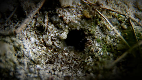 The ants Stock Video Footage