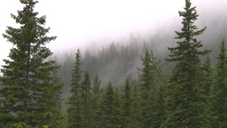 HD2008-8-1-74 rain mtn Stock Video Footage