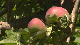 HD2008-8-2-18 fruit stand apple orchard Z Stock Video Footage