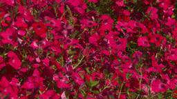 HD2008-8-4-19 hummingbird Stock Video Footage