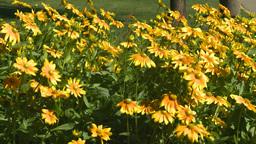 HD2008-8-4-33 flower garden Stock Video Footage