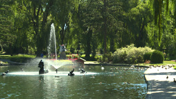 HD2008-8-4-35 water fountain ducks Stock Video Footage