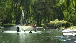 HD2008-8-4-35 water fountain ducks Stock Video Footage