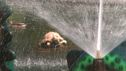 HD2008-8-4-40 water fountain ducks Stock Video Footage