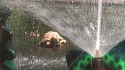 HD2008-8-4-40 water fountain ducks Stock Video Footage