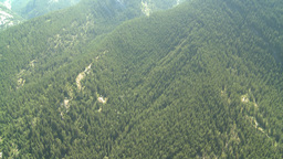HD2008-8-5-12 aerial forest Stock Video Footage