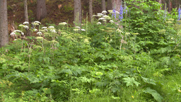 HD2008-8-6-15 woods flowers Stock Video Footage