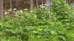 HD2008-8-6-15 woods flowers Footage
