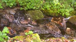 HD2008-8-7-38 mossy mtn stream Footage