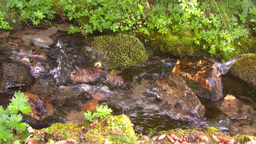 HD2008-8-7-38 mossy mtn stream Stock Video Footage