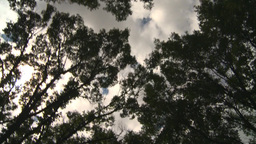HD2008-8-8-8 drive up trees clouds Stock Video Footage