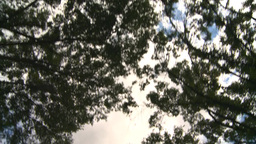 HD2008-8-8-10 drive up trees clouds Footage