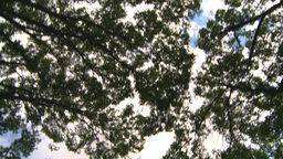 HD2008-8-8-10 drive up trees clouds Stock Video Footage