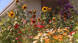 HD2008-8-8-32 flowers Stock Video Footage