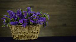 Purple statice flowers Footage