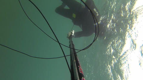 Spear fisherman spearfishing underwater Footage