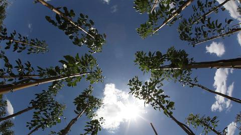 Tropical tree nursery Footage