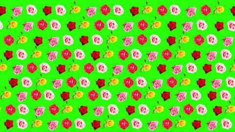 Background of blooming roses time-lapse with green Stock Video Footage