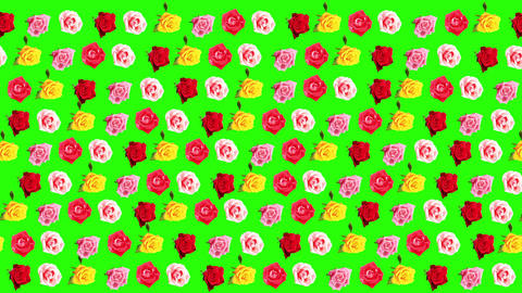 Background of blooming roses time-lapse with green Footage