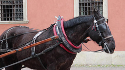 Warsaw, Poland. Horse cab in front of the royal pa Stock Video Footage