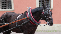 Warsaw, Poland. Horse cab in front of the royal pa Footage