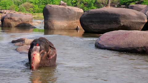 HAMPI, INDIA - APRIL 2013: Elephant bathing in riv Stock Video Footage