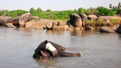 HAMPI, INDIA - APRIL 2013: Man washing his elephan Footage