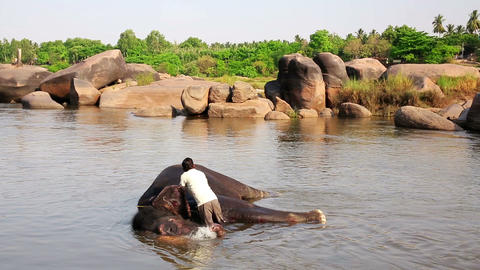 HAMPI, INDIA - APRIL 2013: Man washing his elephan Stock Video Footage