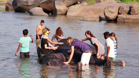 HAMPI, INDIA - APRIL 2013: Man washing his elephan Footage