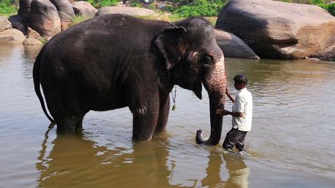 HAMPI, INDIA - APRIL 2013: Man washing his elephan Stock Video Footage