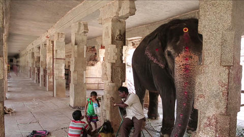 HAMPI, INDIA - APRIL 2013: Elephant and its minder Stock Video Footage