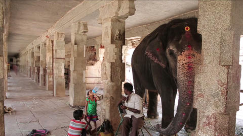 HAMPI, INDIA - APRIL 2013: Elephant and its minder Stock Video Footage