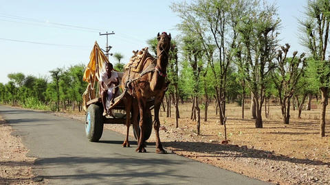 PUSHKAR, INDIA - APRIL, 2013: Camel-driven cart on Stock Video Footage