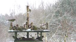 Bird Feeder at winter time Footage