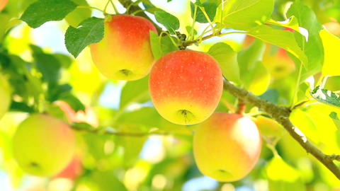 Delicious apples with blue sky in the background Stock Video Footage