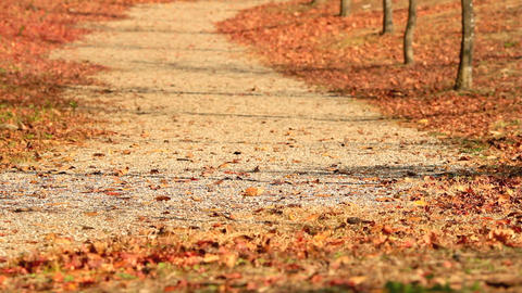 Autumn leaves are flying down the road Footage
