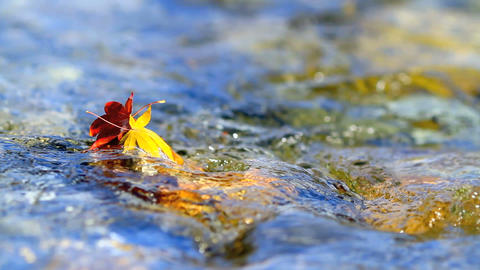 Multi-colored autumn leaves on the water Footage