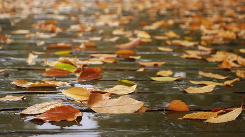 Rain drops dripping on autumn leaves on the road Footage