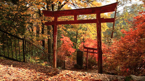 Torii on the background of autumn leaves Stock Video Footage