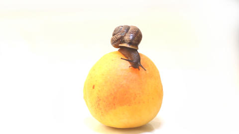 snail and fresh fruit an apricot on a white backgr Footage
