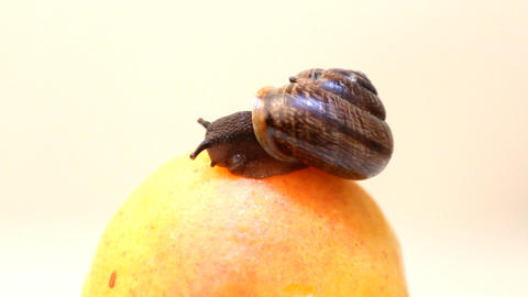 snail eats fruit an apricot on a white background Stock Video Footage