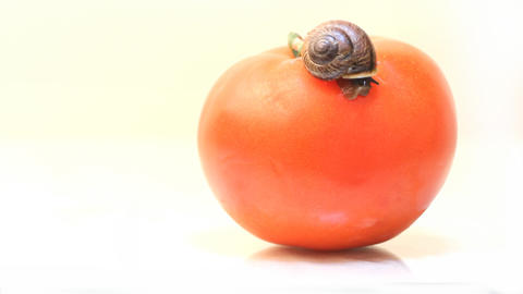 Snail To Sleep On A Fresh Vegetable Tomato On A Wh stock footage