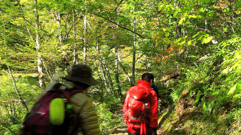 People hiking in the autumn forest Footage